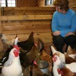 Hilde i hønsehuset